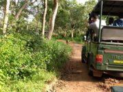 Safari ride in ooty